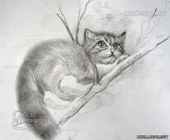 Рисуем карандашом кота на дереве